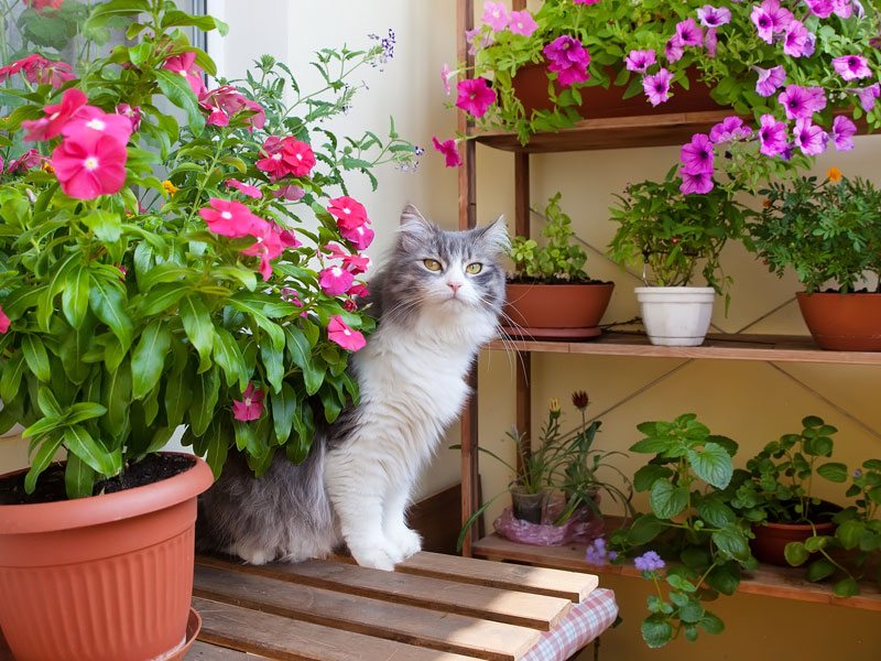 Beet und Balkon